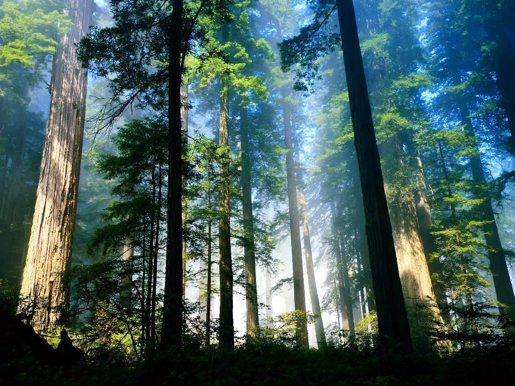Sử dụng giấy tái chế là cách để bảo vệ rừng tốt nhất